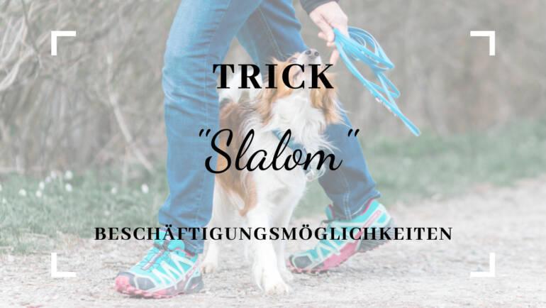 """Trick """"Slalom durch die Beine"""""""