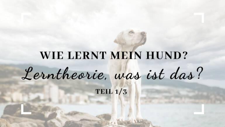 Wie lernt mein Hund – Lerntheorie, was ist das? Teil 1/3
