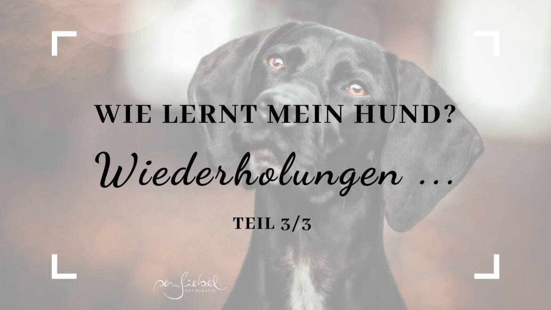 Wie lernt mein Hund – Wiederholungen – Teil 3/3