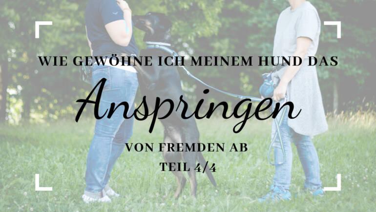 Wie gewöhne ich meinem Hund das Anspringen von Fremden ab? (Teil 4/4)