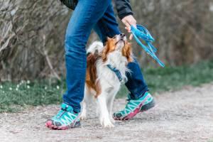 Hundeschule Allgäu - mit Spaß und Lernen einen gemeinsamen Weg gehen