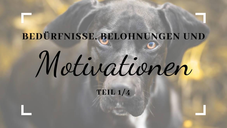 Bedürfnisse, Belohnungen und Motivation – Teil 1/4