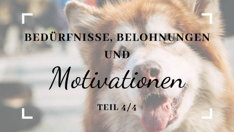 Bedürfnisse, Belohnungen und Motivation – Teil 4