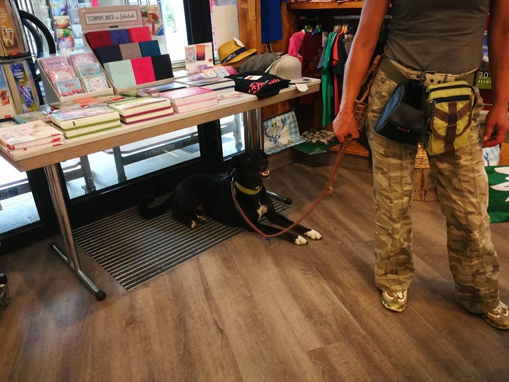 Hundeführerschein Hundeschule Allgäu Vorbereitungskurs