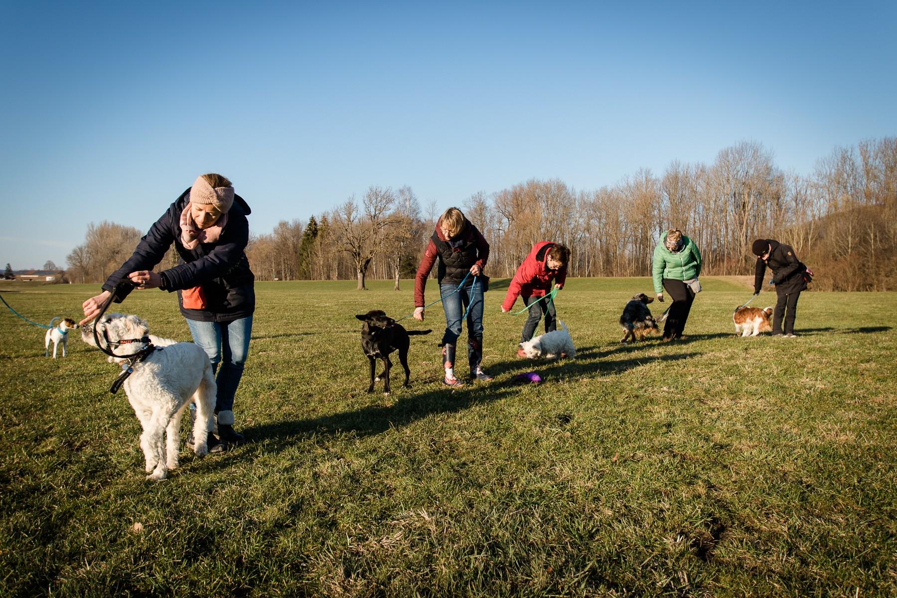 Hundecoach Allgäu - Zusammen zum Ziel - lernen und miteinander arbeiten
