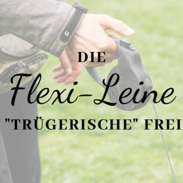 """Die Flexileine – eine """"trügerische"""" Freiheit …"""