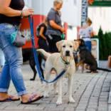 Stadttraining-Hundecoach-Allgaeu-3.jpg