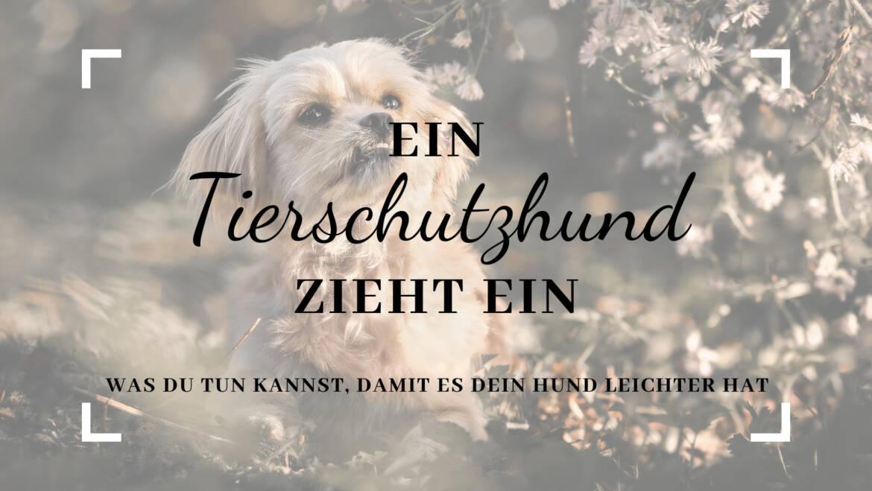 Ein Tierschutzhund zieht ein …