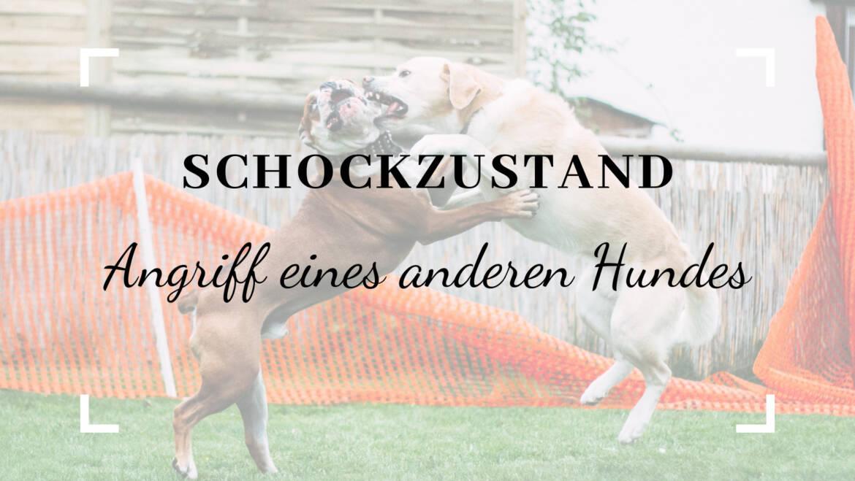 Schockzustand – Angriff eines anderen Hundes