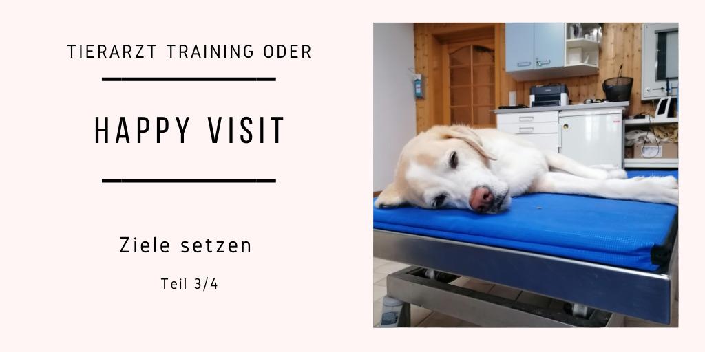 Tierarzt Training oder auch Happy Visit Teil 3/4